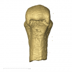 KB542 Haplorhini metacarpal